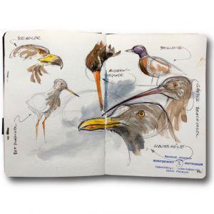 Nordseevögel